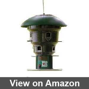 amazon squirrel proof bird feeders