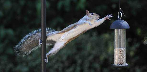 Best Squirrel Proof Bird Feeders