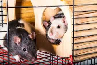 Best Rat Cage Door