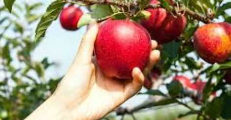 Best Fertilizer for Apple Trees Buying Guide in 2021
