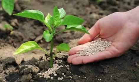Best Fertilizers for Plants and Flowers in 2021