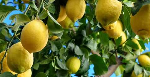Best fertilizer for Citrus Trees Buying Guide in 2021