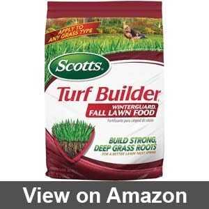 Best fertilizer for clumping bamboo