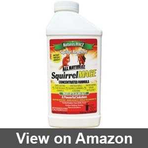 Best squirrel repellent for garden