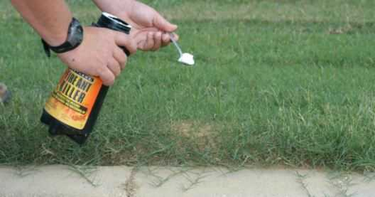 Best Ant Killer for Lawn in 2021