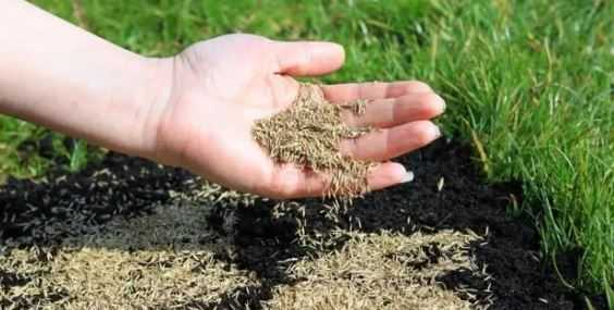 Best Grass Seed for Clay Soil in 2021