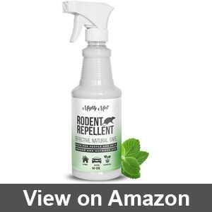 Best essential oil squirrel repellent
