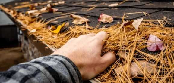 Best Gutter Guard for Pine Needle in 2021