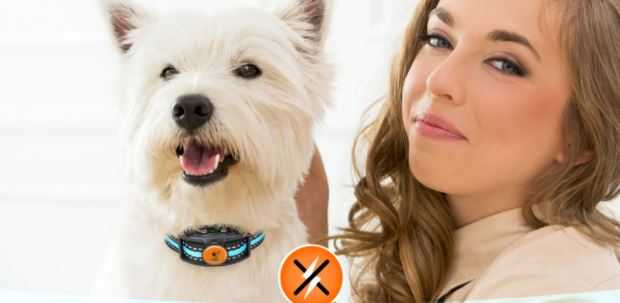 Best Shock Collar For Small Dogs in 2021