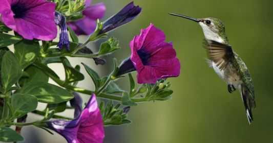 Ten Best Ways to Attract Hummingbirds in the Garden