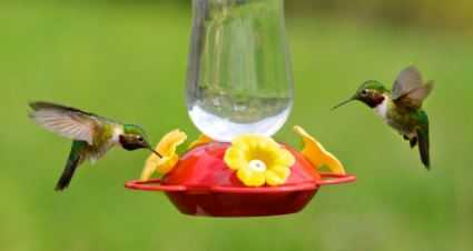 How to Choose a Best Hummingbird Feeder?